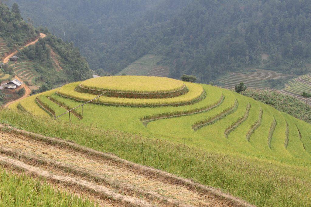 Mu Cang Chai rice terraces in Vietnam