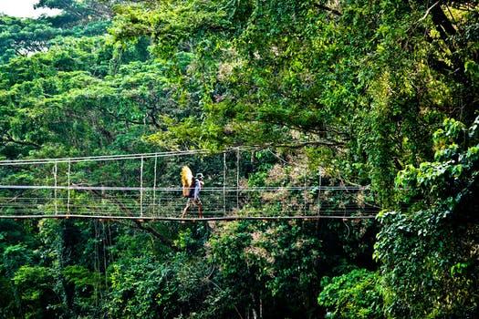 Canopy tree walk in Taman Negara, Malaysia