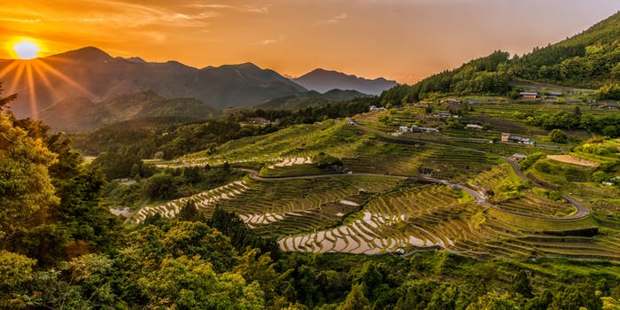 Sundown on rice terraces