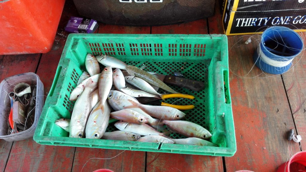 Freshly caught fish on Koh Rong