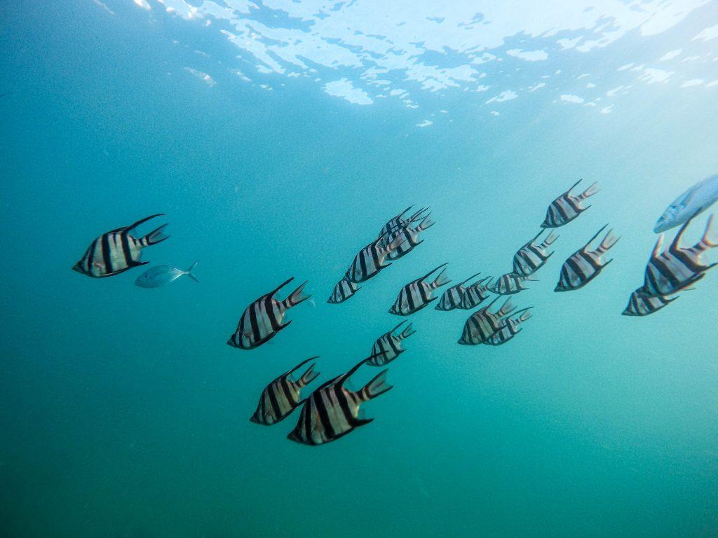 marine life on Koh Rong and Koh Rong Sanloem