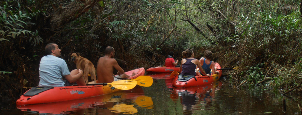 Kayak in the mangrove forest of Koh Kong, Cambodia