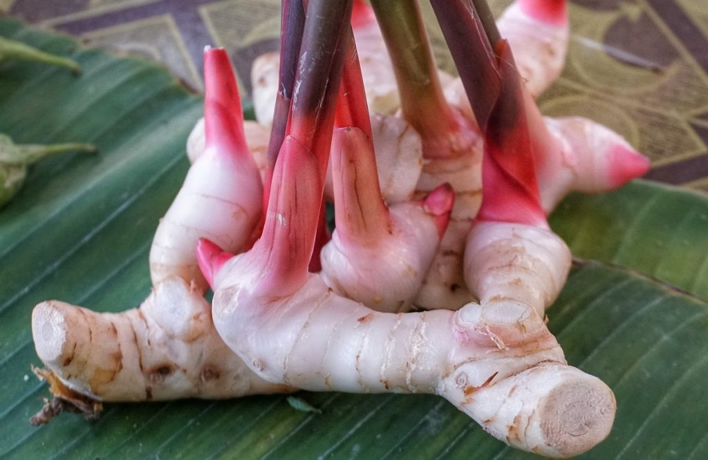 Galangal is significant to Khmer cuisine