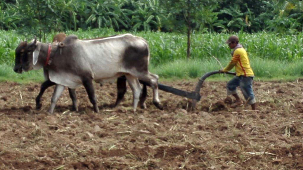 Silk Island farmer