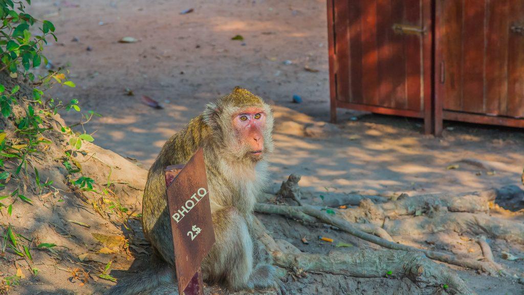 Monkey exploited for photos