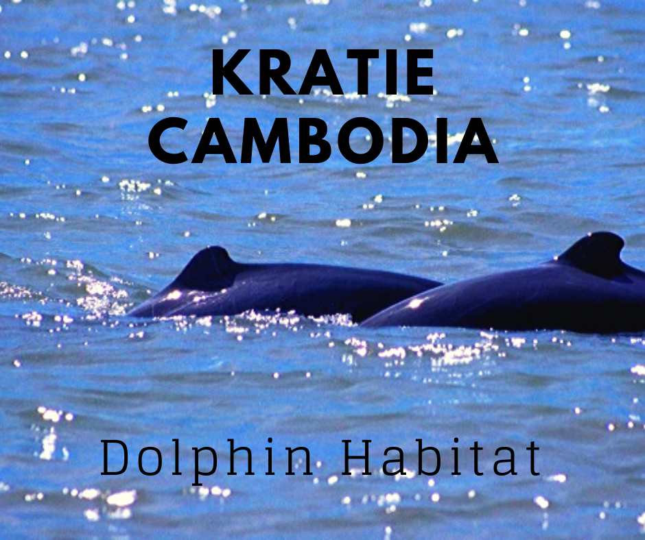 Link to Kratie travel guide