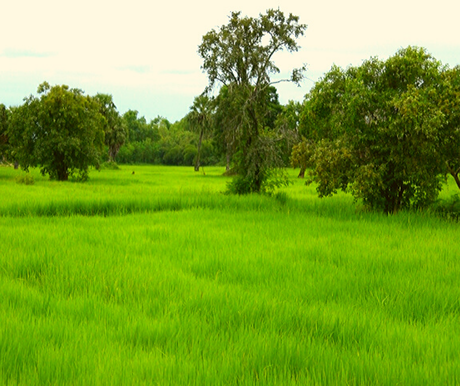 Phimai thailand