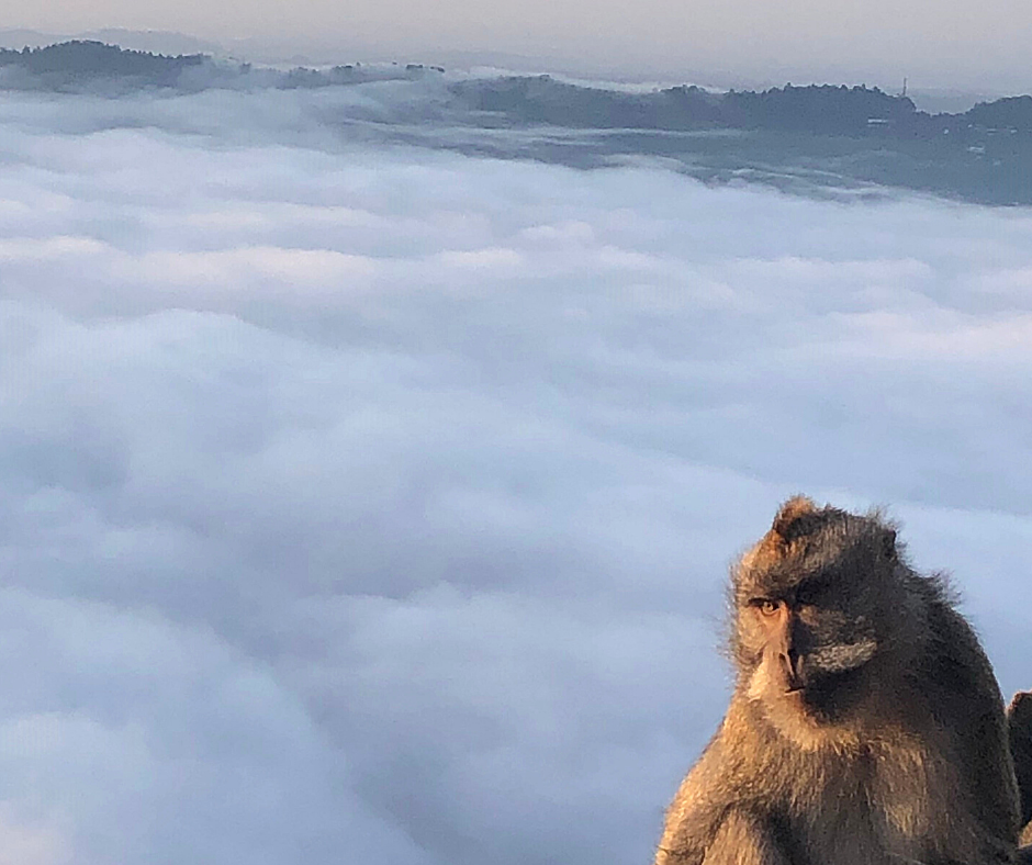 A monkey on Mount Batur