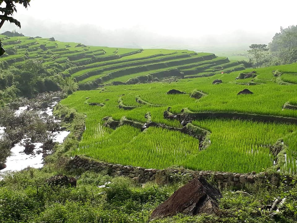Pu Luong rice terraces