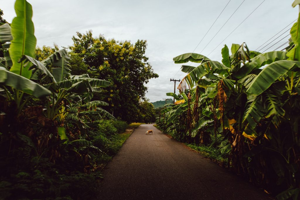 Rural road in Kanchanaburi